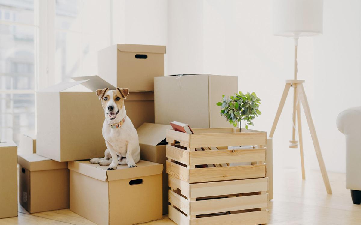 Baukindergeld, Wohnungsbauprämie und mehr - lesen Sie bei der DSL Bank, welche Förderungen für den Hauskauf Ihnen zur Verfügung stehen.